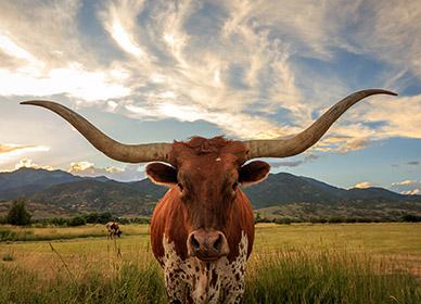 Curso Escolar Texas